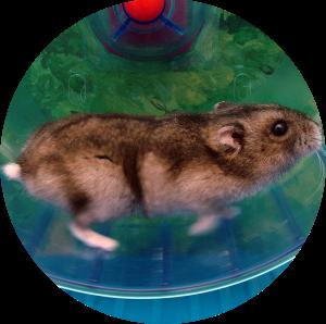Der Hamster im Rad – Jagdjahr 2015/2016