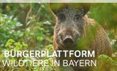 """""""Wildtierportal Bayern"""": Bestandteil moderner Jungjägerausbildung"""